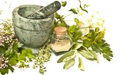 14 Maggio – Conoscenza e raccolta erbe mangerecce e medicinali